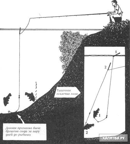 как ловит линя на удочку